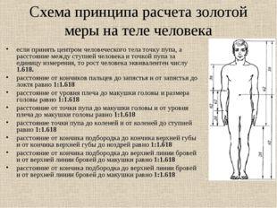 Схема принципа расчета золотой меры на теле человека если принять центром чел