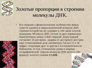 Золотые пропорции в строении молекулы ДНК. Все сведения о физиологических осо