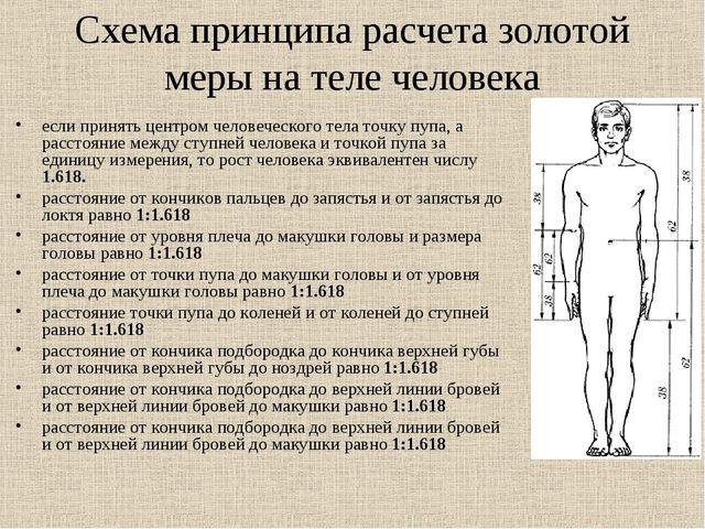 Схема принципа расчета золотой меры на теле человека если принять центром чел...