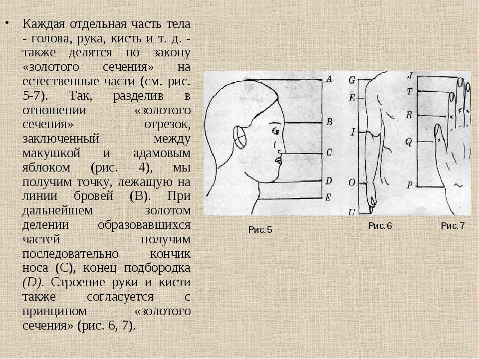 Каждая отдельная часть тела - голова, рука, кисть и т. д. - также делятся по...