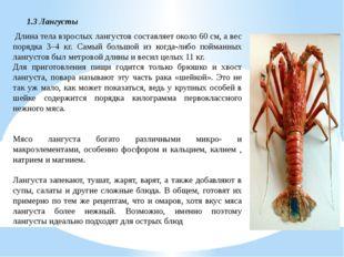 Длина тела взрослых лангустов составляет около 60 см, а вес порядка 3–4 кг.