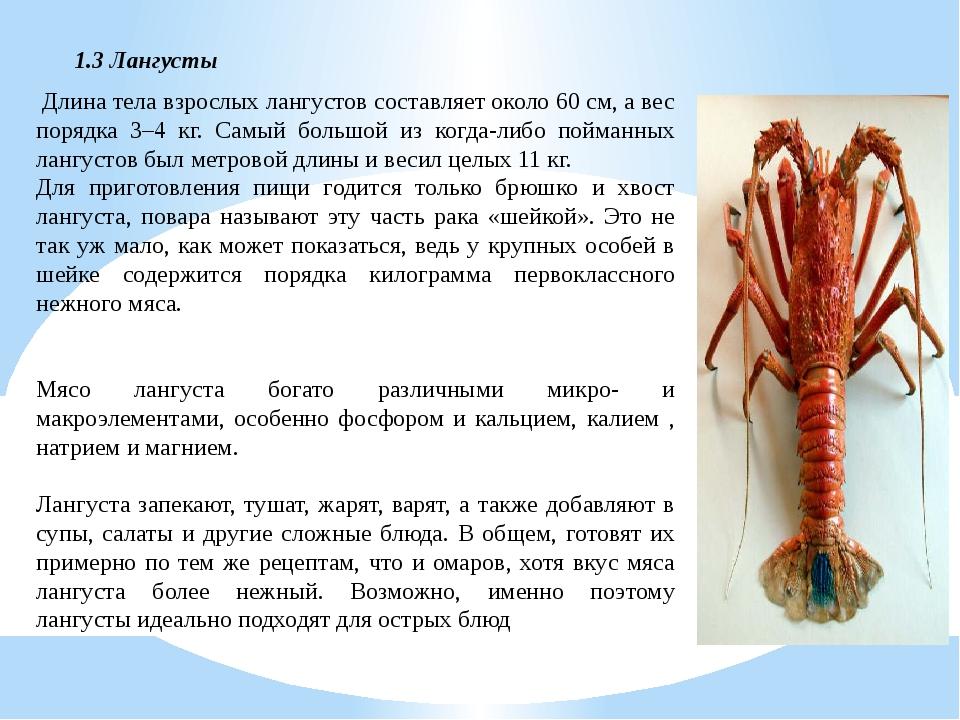 Длина тела взрослых лангустов составляет около 60 см, а вес порядка 3–4 кг....