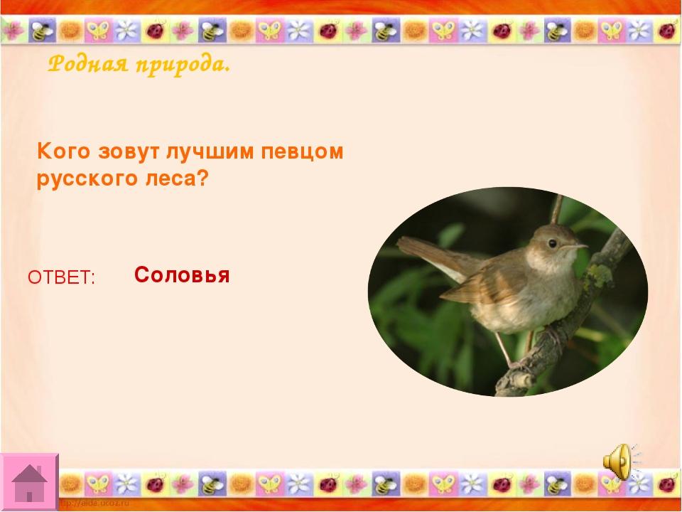 Родная природа. Кого зовут лучшим певцом русского леса? ОТВЕТ: Соловья