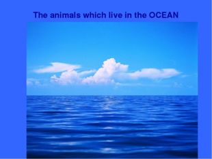 The animals which live in the OCEAN