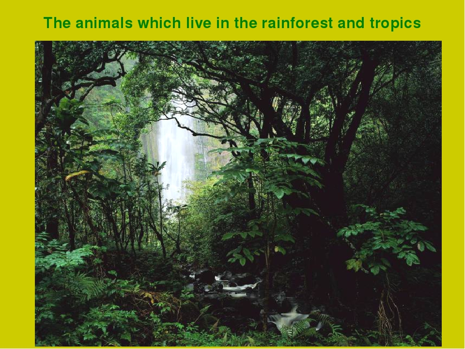 The animals which live in the rainforest and tropics