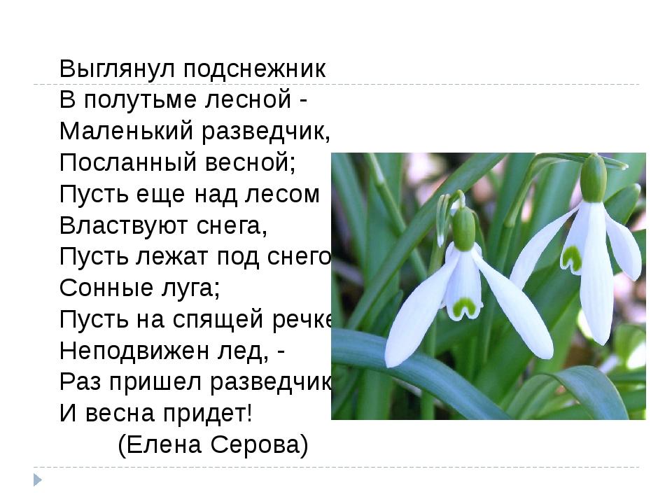 Выглянул подснежник В полутьме лесной - Маленький разведчик, Посланный весной...