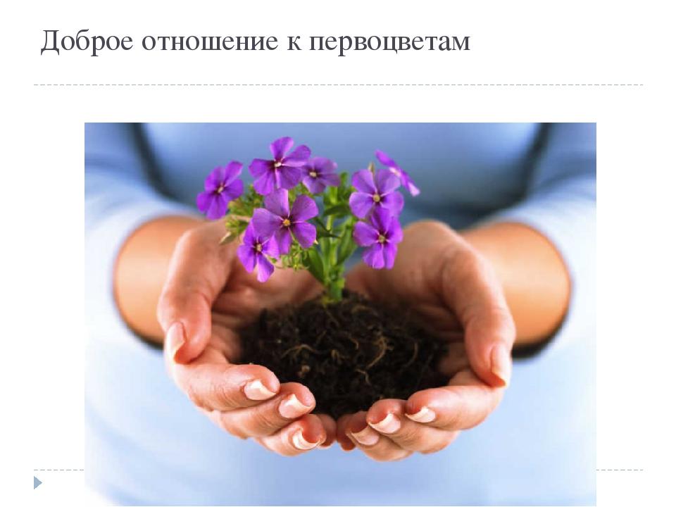 Доброе отношение к первоцветам