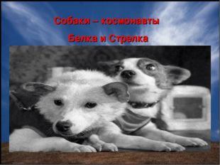 Собаки – космонавты Белка и Стрелка