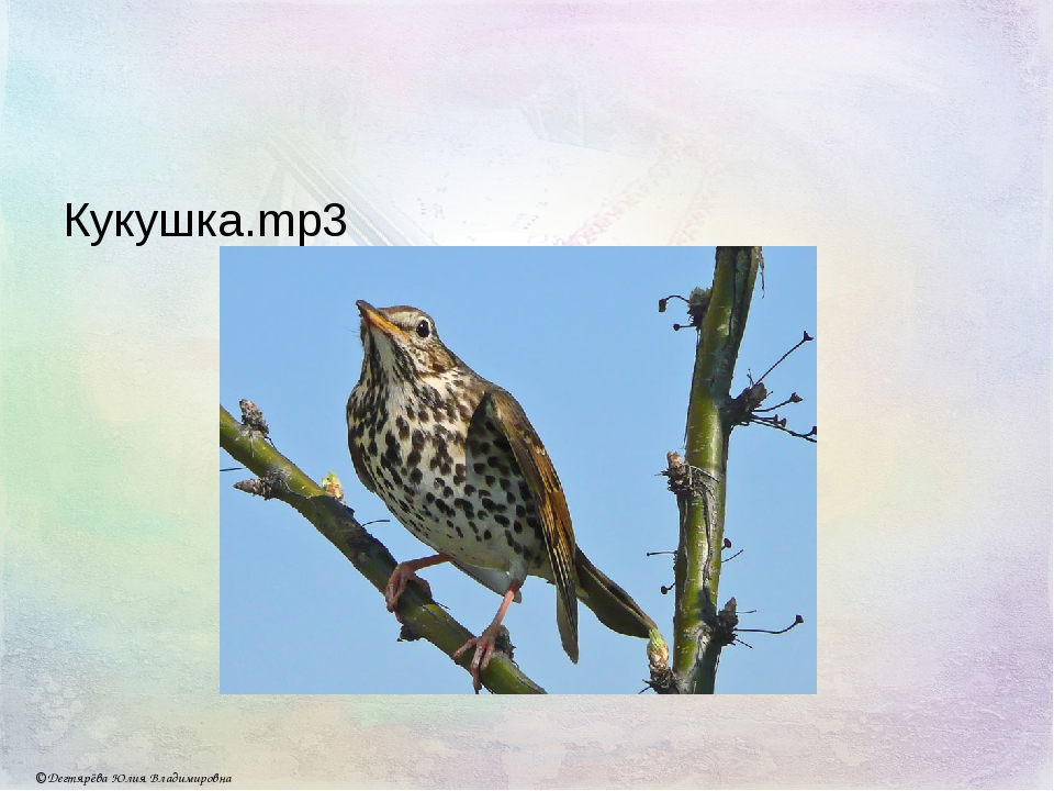 Кукушка.mp3 © Дегтярёва Юлия Владимировна