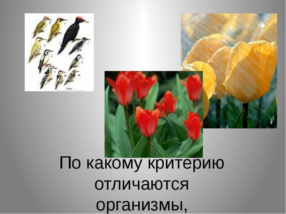 По какому критерию отличаются организмы, изображенные на рисунках ?
