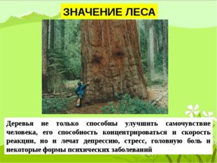 ЗНАЧЕНИЕ ЛЕСА Деревья не только способны улучшить самочувствие человека, его