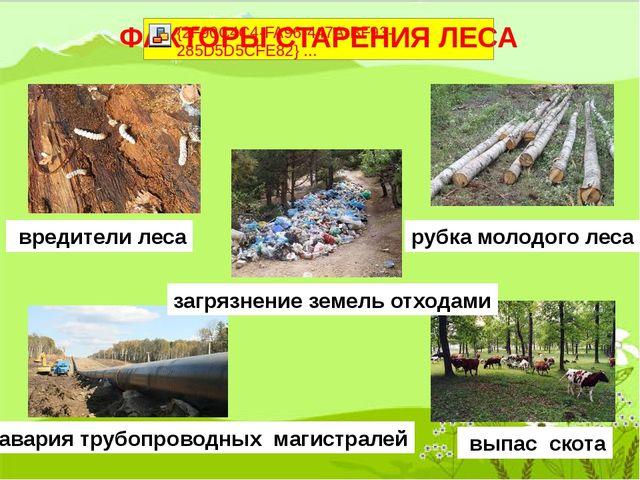 вредители леса загрязнение земель отходами рубка молодого леса выпас скота а...