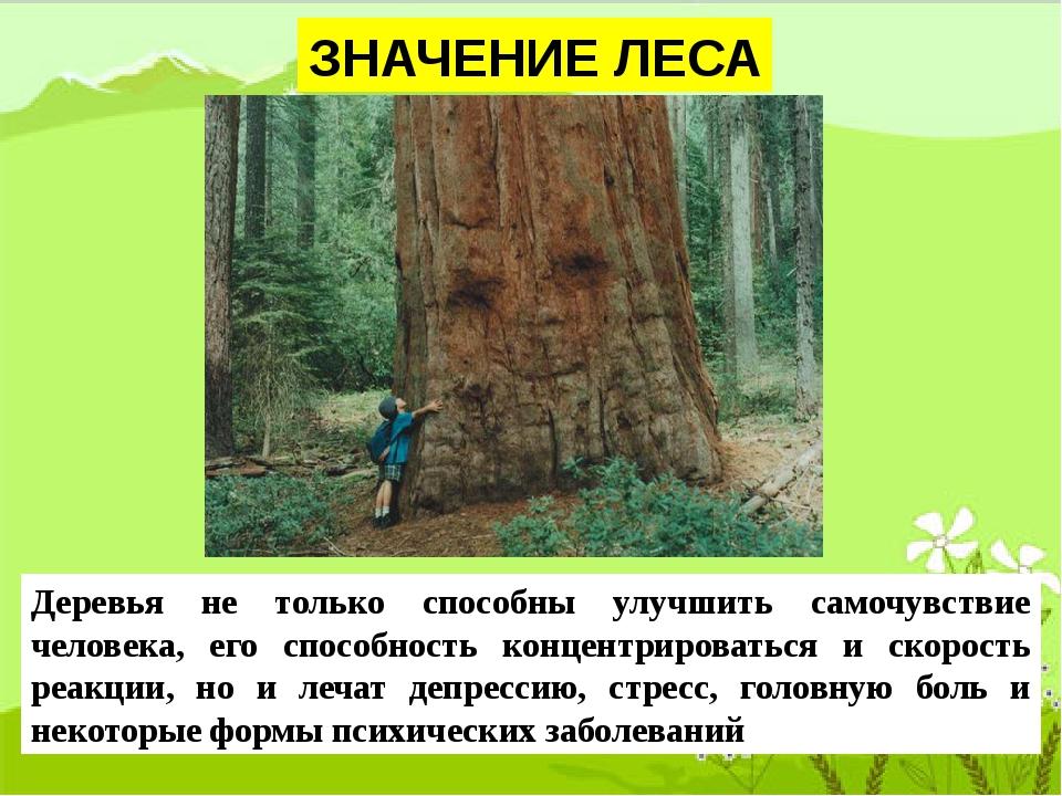 ЗНАЧЕНИЕ ЛЕСА Деревья не только способны улучшить самочувствие человека, его...