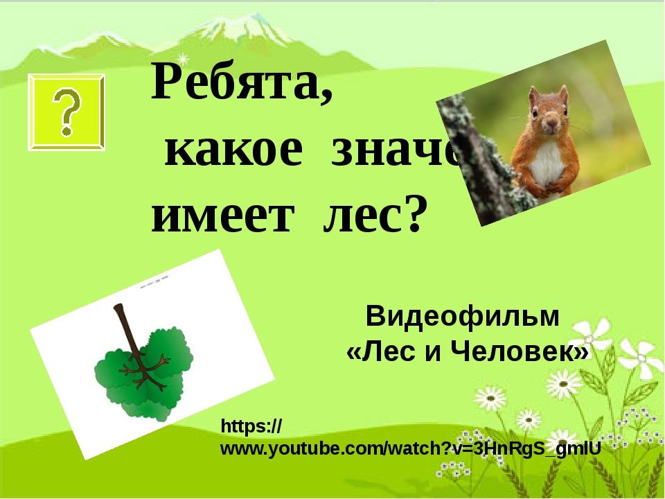 Ребята, какое значение имеет лес? Видеофильм «Лес и Человек» https://www.yout...