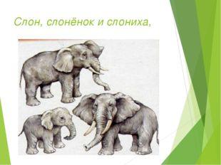 Слон, слонёнок и слониха,