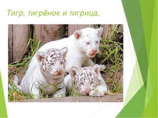 Тигр, тигрёнок и тигрица,