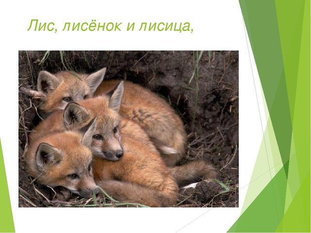 Лис, лисёнок и лисица,