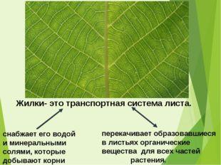 перекачивает образовавшиеся в листьях органические вещества для всех частей р