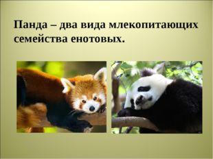 Панда – два вида млекопитающих семейства енотовых.