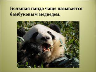 Большая панда чаще называется бамбуковым медведем.