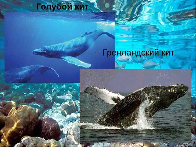 Голубой кит Гренландский кит