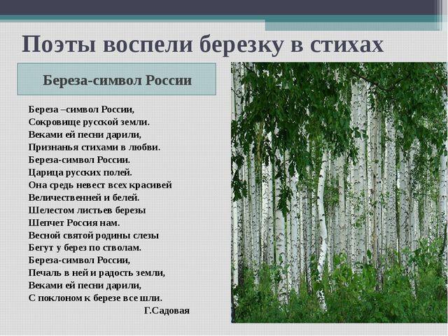 Поэты воспели березку в стихах Береза-символ России Береза –символ России, Со...
