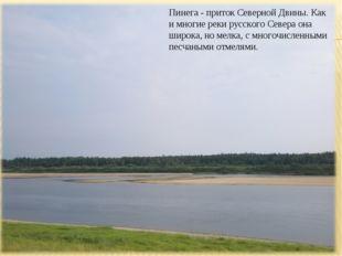 Пинега - приток Северной Двины. Как и многие реки русского Севера она широка,