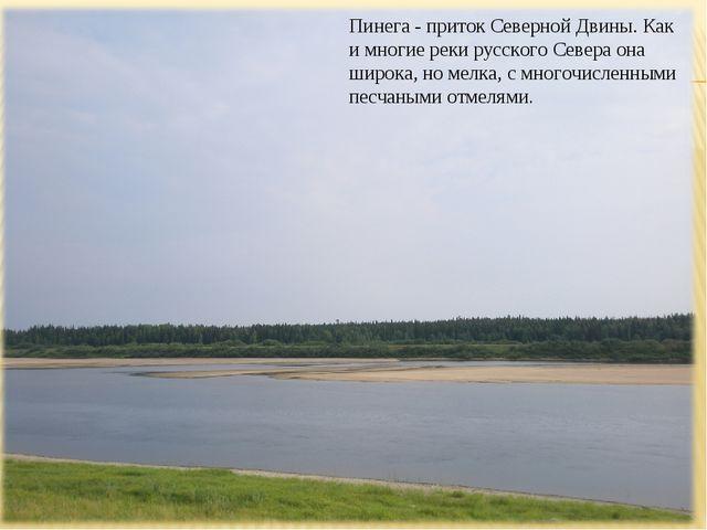 Пинега - приток Северной Двины. Как и многие реки русского Севера она широка,...