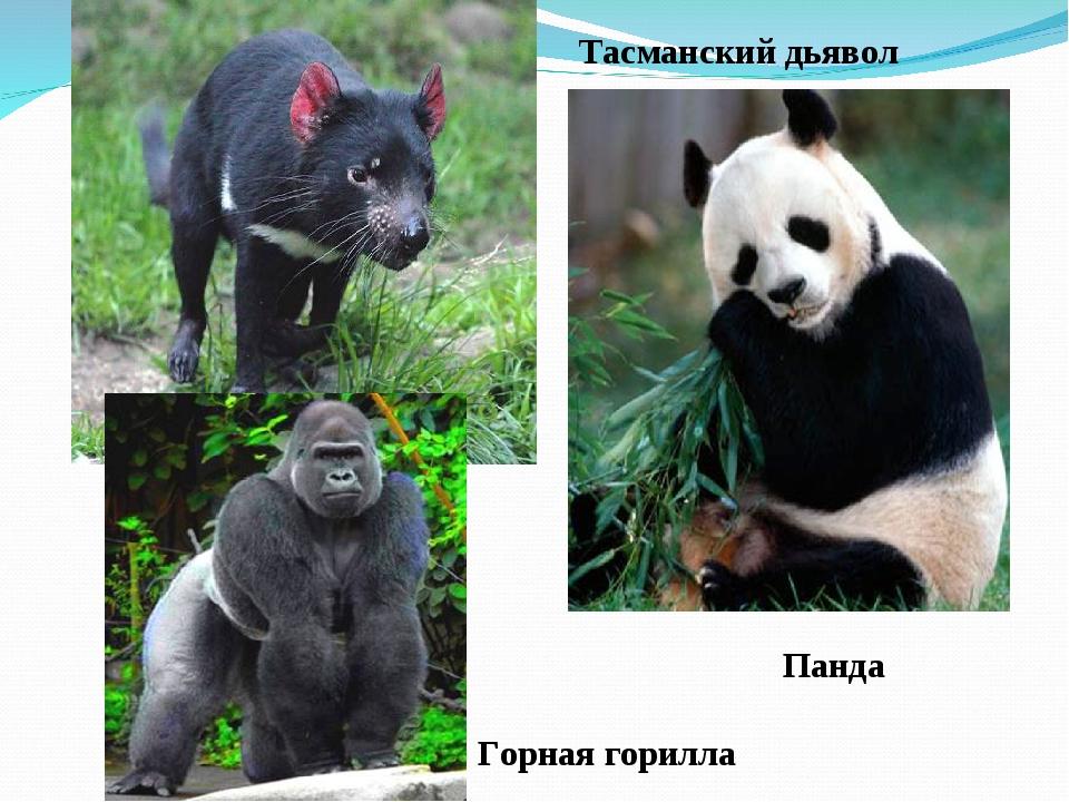 Панда Горная горилла Тасманский дьявол