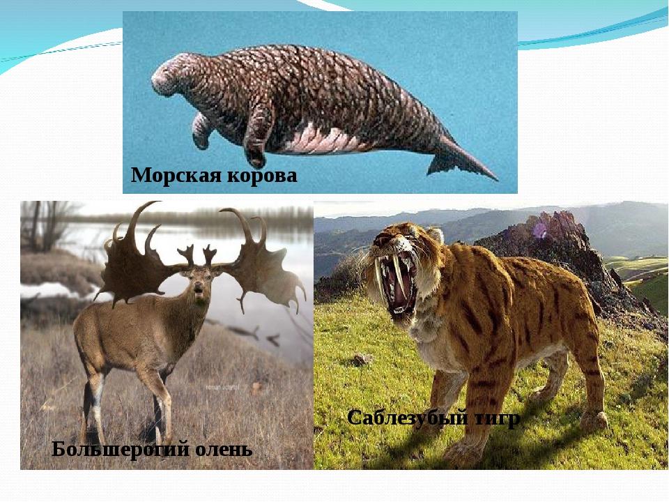 Морская корова Большерогий олень Саблезубый тигр