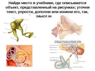Найди место в учебнике, где описывается объект, представленный на рисунках; у