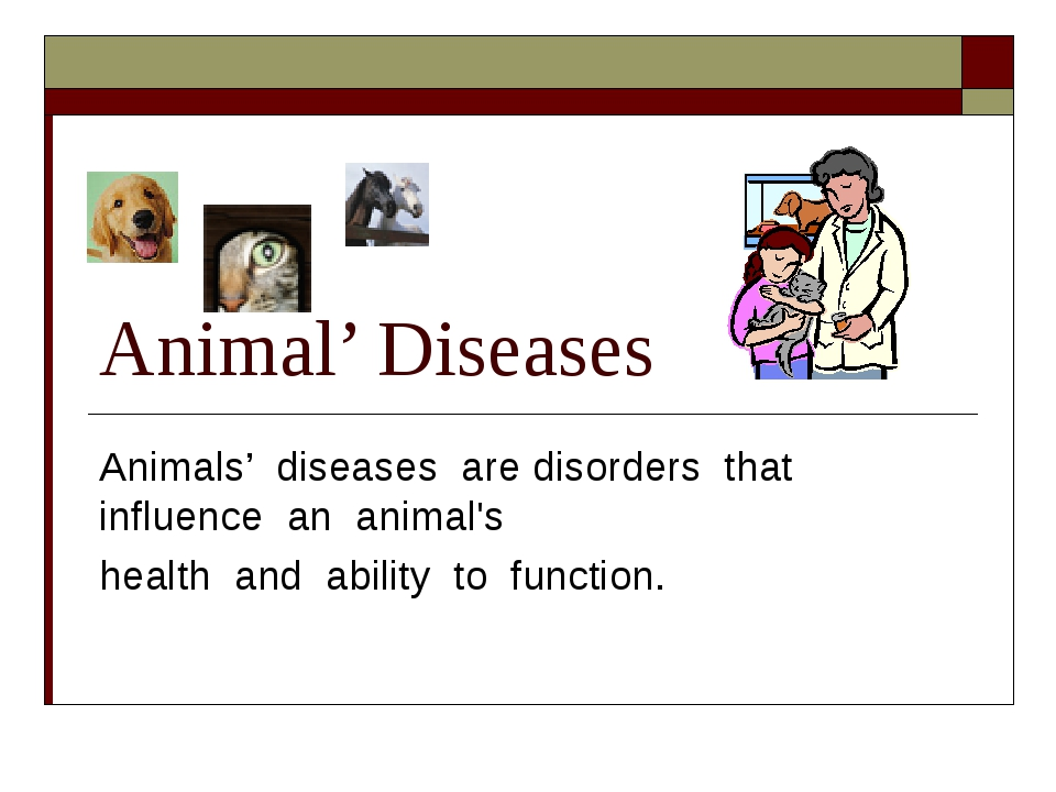 Animal' Diseases Animals' diseases are disorders that influence an animal's h...