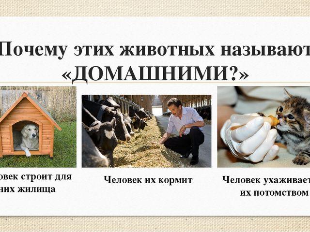 Почему этих животных называют «ДОМАШНИМИ?» Человек строит для них жилища Чело...
