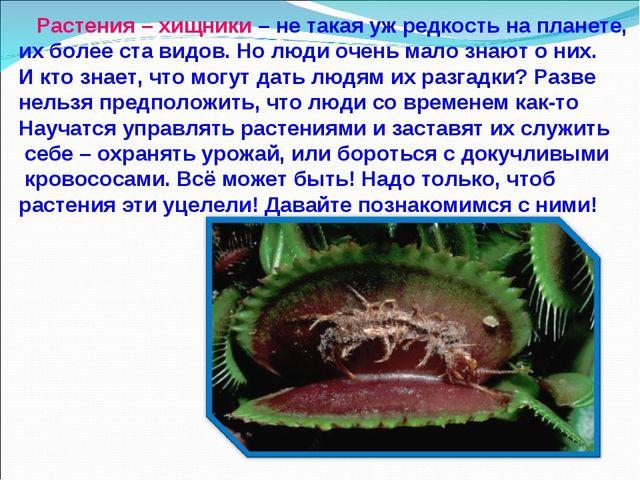 Растения – хищники – не такая уж редкость на планете, их более ста видов. Но...