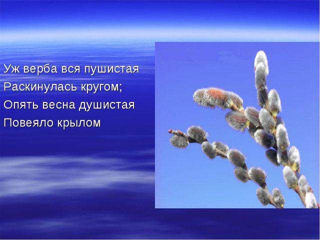 Уж верба вся пушистая Раскинулась кругом; Опять весна душистая Повеяло крылом