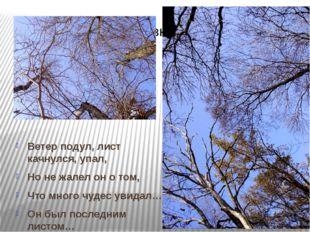 Ветер подул, лист качнулся, упал, Но не жалел он о том, Что много чудес увид