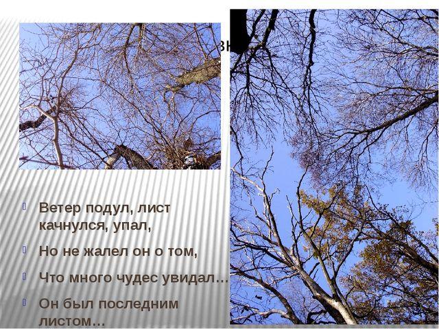 Ветер подул, лист качнулся, упал, Но не жалел он о том, Что много чудес увид...