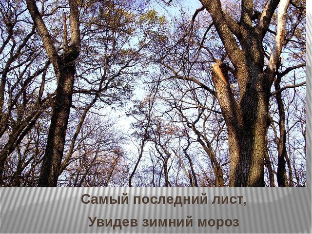 Самый последний лист, Увидев зимний мороз