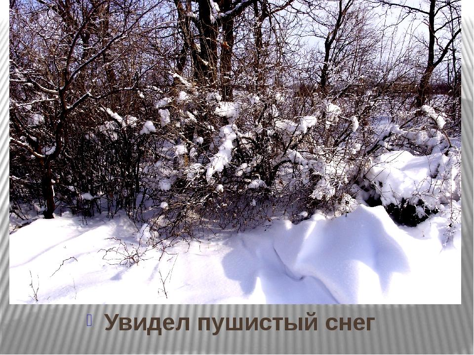 Увидел пушистый снег