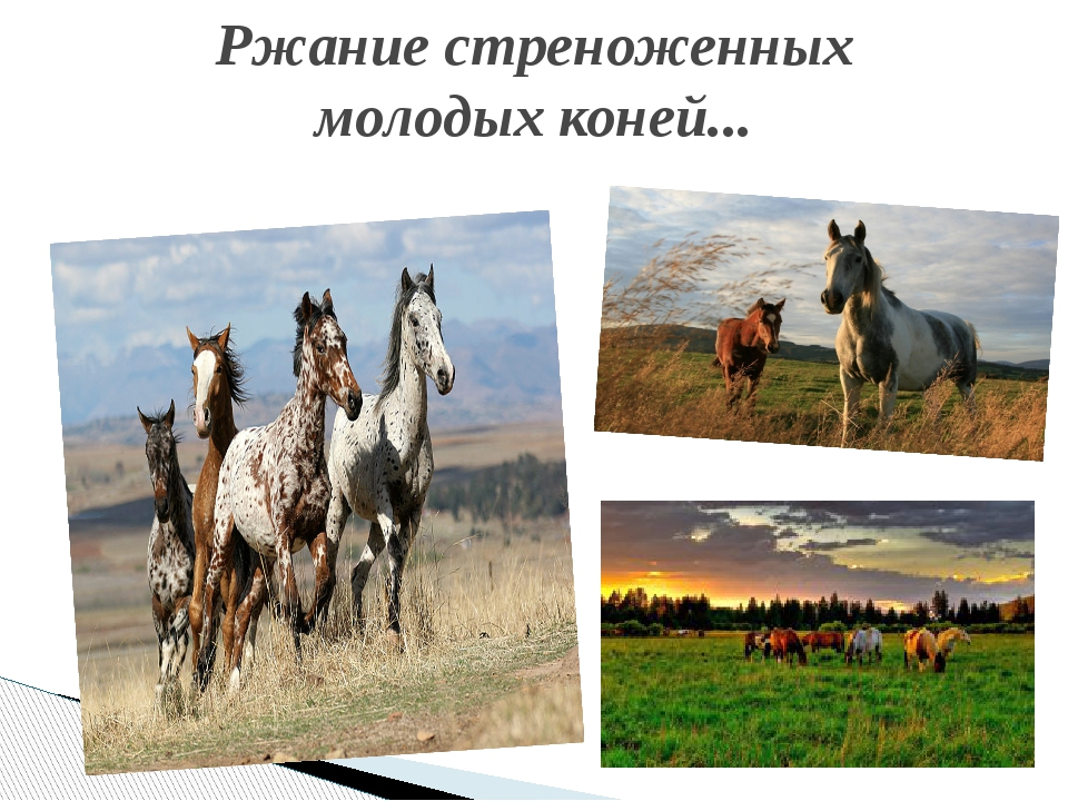 Ржание стреноженных молодых коней...