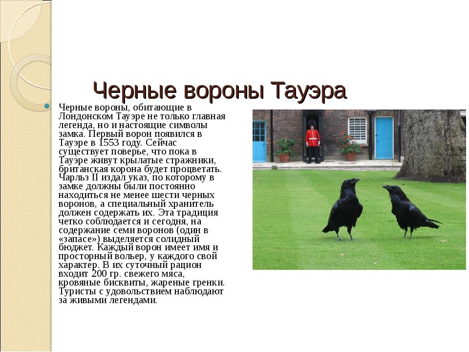 Черные вороны Тауэра Черные вороны, обитающие в Лондонском Тауэре не только...