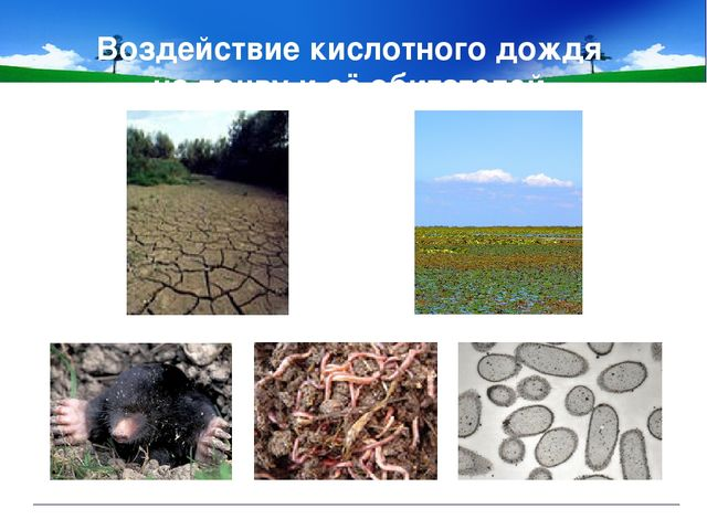 Воздействие кислотного дождя на почву и её обитателей.