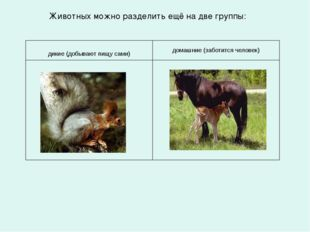 Животных можно разделить ещё на две группы: дикие (добывают пищу сами) домашн