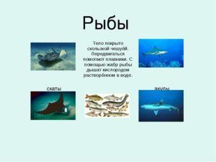 Рыбы   Тело покрыто скользкой чешуёй. Передвиг