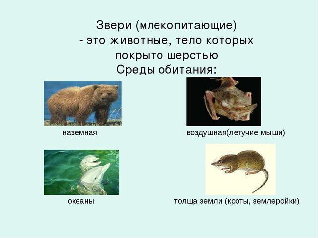 Звери (млекопитающие) - это животные, тело которых покрыто шерстью Среды обит...