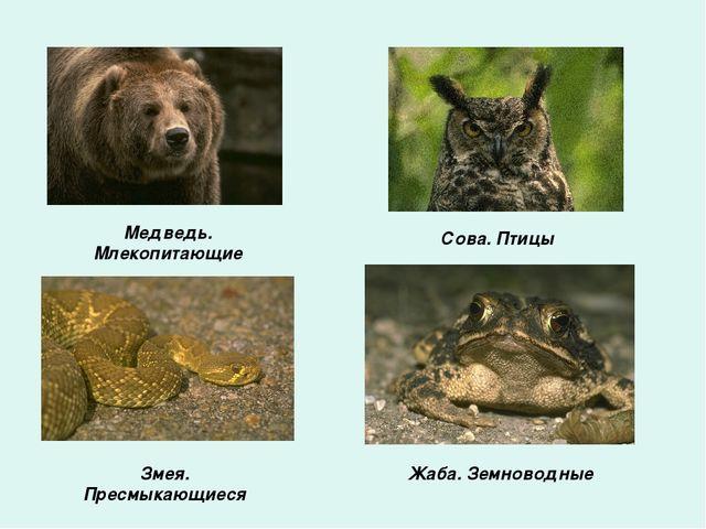 Медведь. Млекопитающие Сова. Птицы Змея. Пресмыкающиеся Жаба. Земноводные