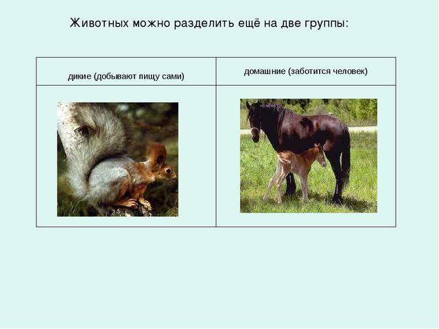 Животных можно разделить ещё на две группы: дикие (добывают пищу сами) домашн...