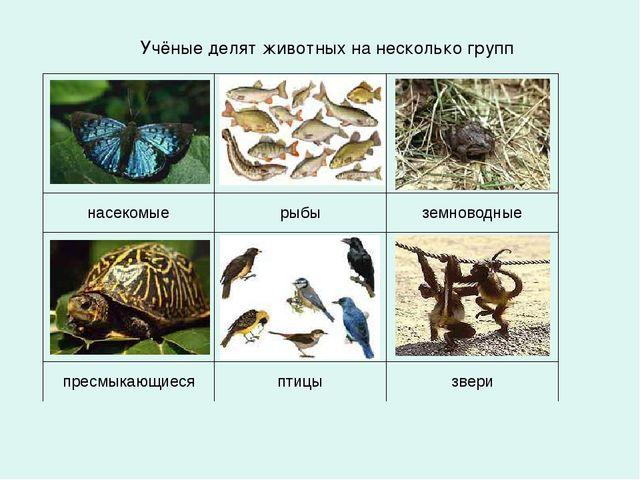 Учёные делят животных на несколько групп  ...