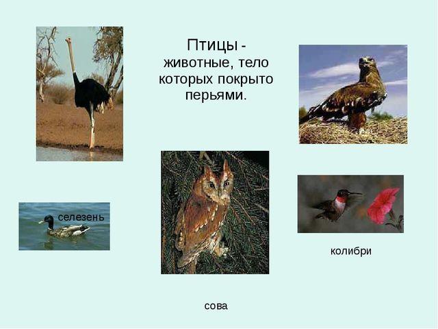 страус Птицы-животные, тело которых покрыто перьями....