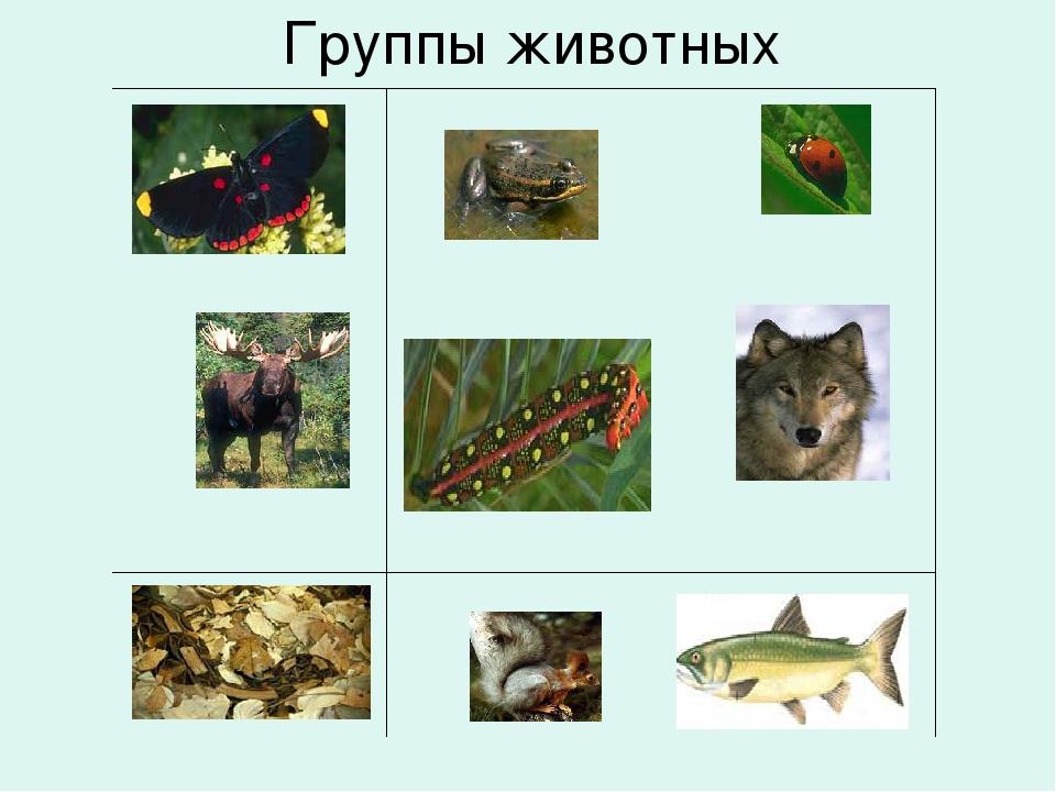 Группы животных  ...